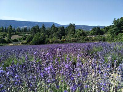 Hovita Arometherapy Lavender Hydrating Facial