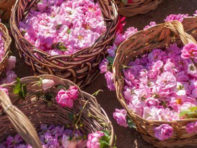 Hovita Aromatherapy Rose Balancing Facial